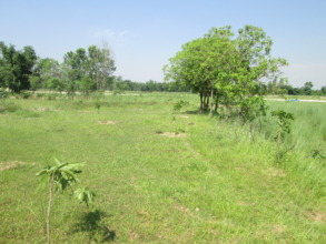 River bank utilized for planting trees