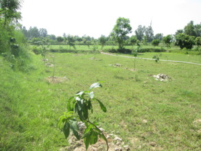 Planted trees in the area