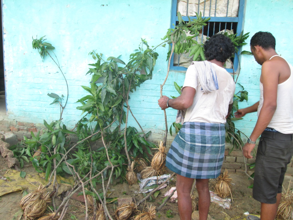Selection of trees plant before plantation