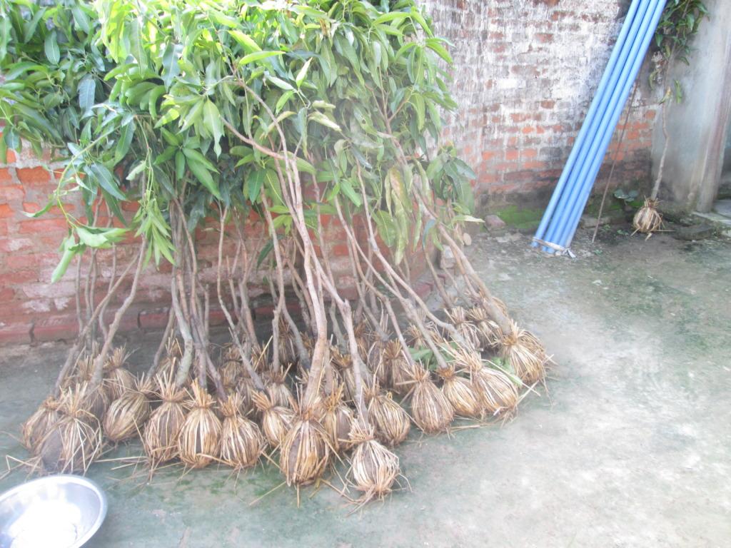 Arrangement of tree plants for a certain plot