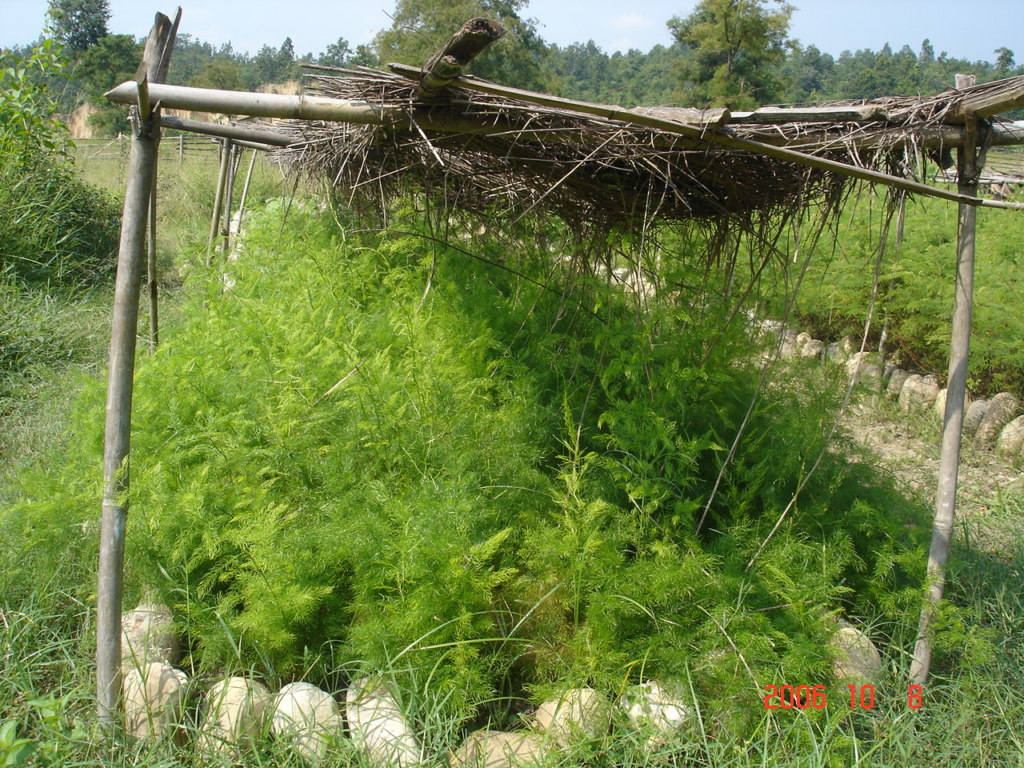 Nursery of trees being developed for plantation