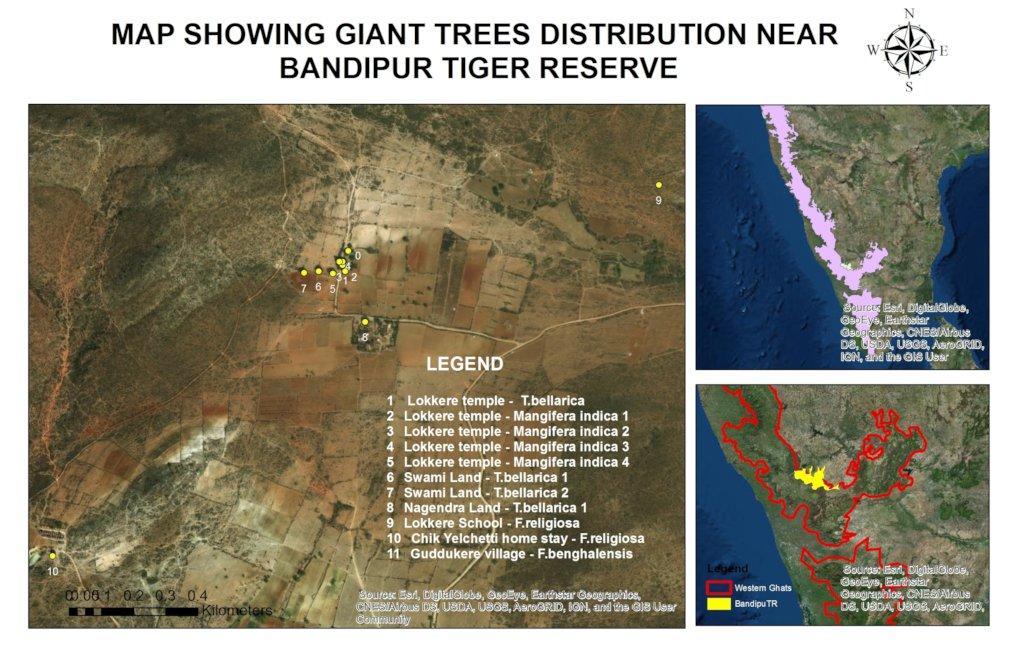 Giant Tree map-Bandipur