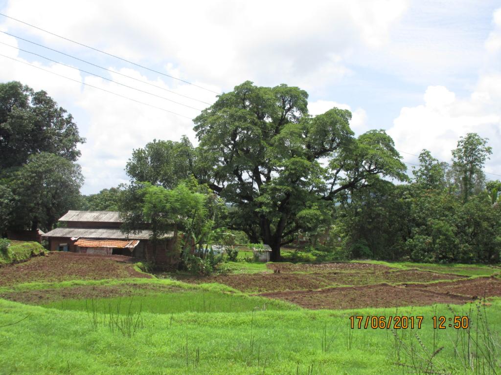 Tree insurance-01