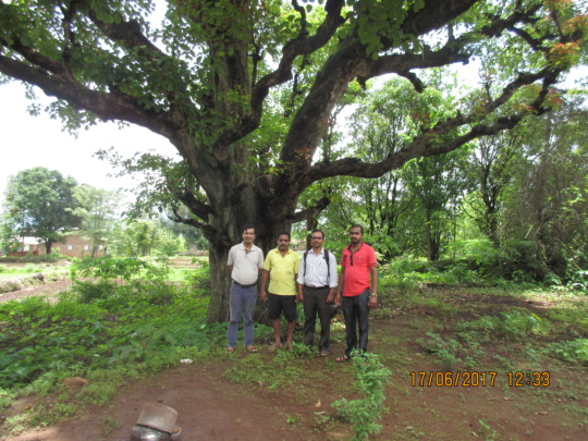 Tree insurance-02
