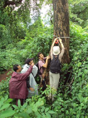 Giant trees-Monsoon survey