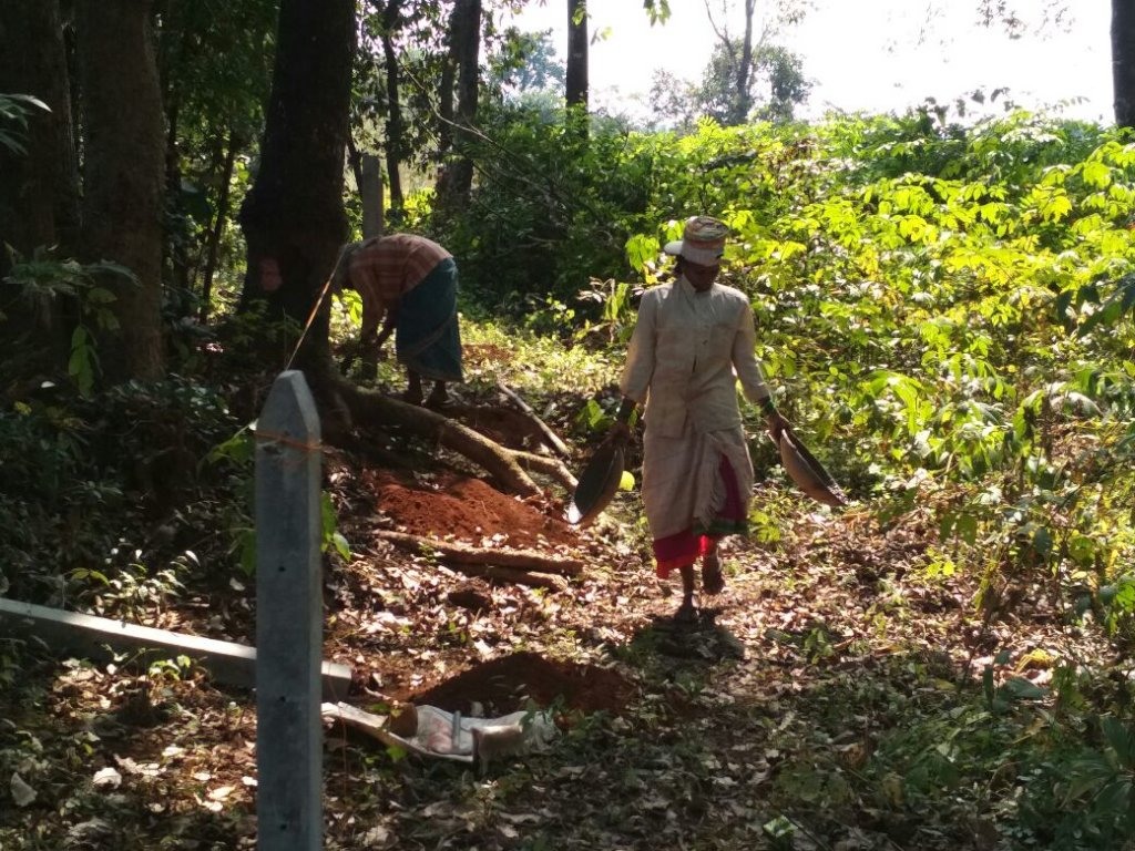Protection of giant trees in Village Sangave