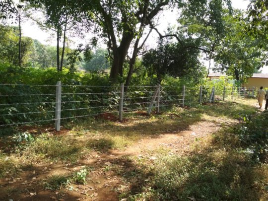 Protection of giant trees in Village Sangave-2
