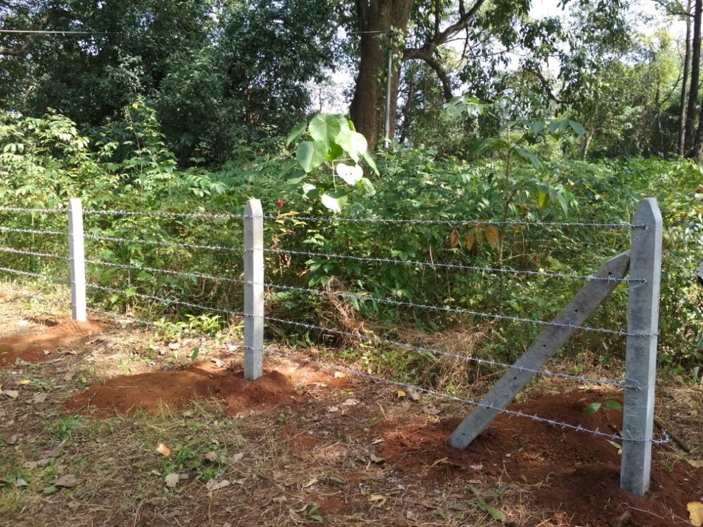 Protection of giant trees in Village Sangave-3