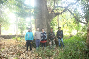 Giant Terminalia bellirica tree and project team
