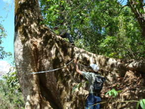 Saving giant trees in the Western Ghats of India