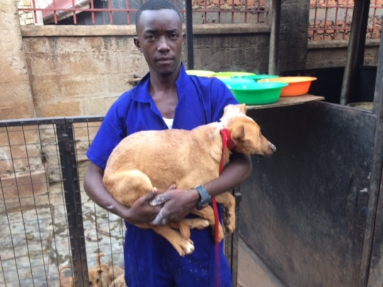 Dominic w/dog rescued from kids throwing stones