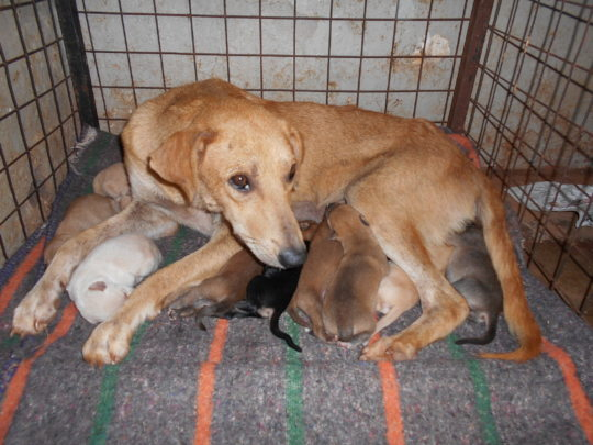 Bella & her 9 puppies safely at The Haven