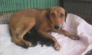 Mama dog rescued with her 4 puppies-Dec