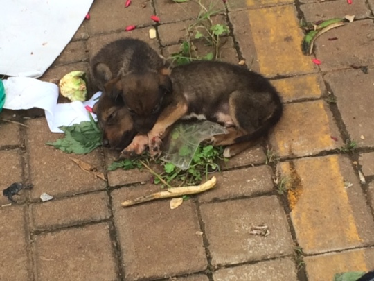 Mama & her 2 pups rescued & now safe at The Haven