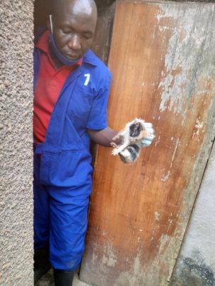 Rescued from a pit latrine!