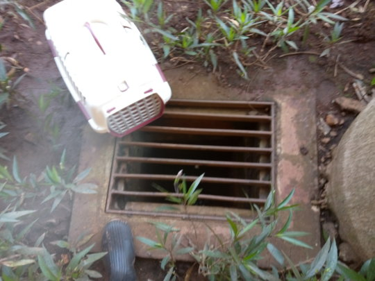 The kitty was in this sewer at Acacia Mall!