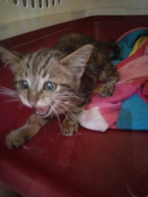 Kitty heard crying at Acacia Mall-rescued