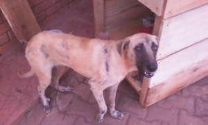 When Sammy was rescued she had mange, fleas, ticks