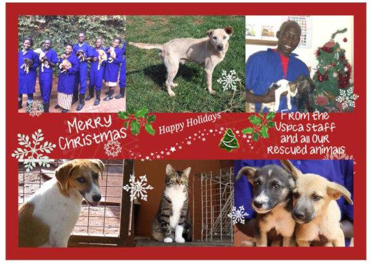 Happy Holidays from the USPCA & AKI