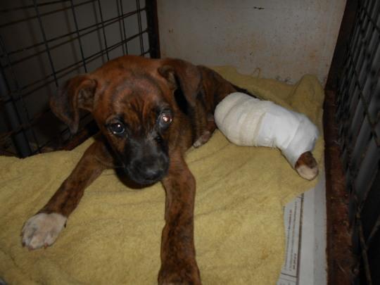 Jicho needed surgery on her injured eye & leg