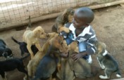 Help Us Transform Uganda's Only Animal Shelter