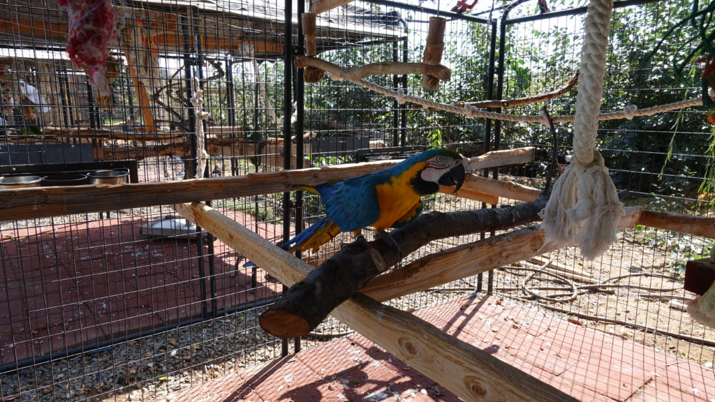 Give Abandoned Companion Birds a Second Chance