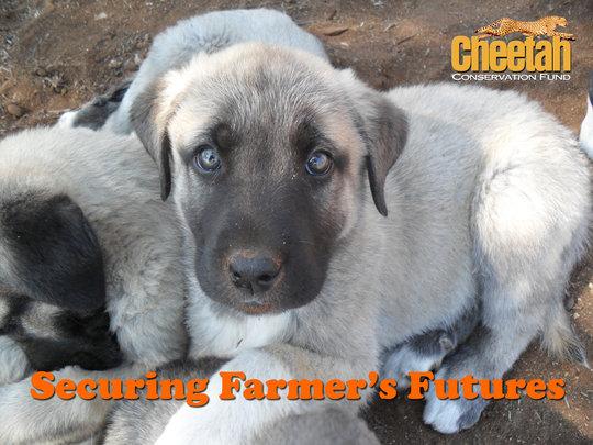 Securing Farmer