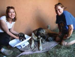 CCF's Kangal Feliz and her puppies with CCF staff