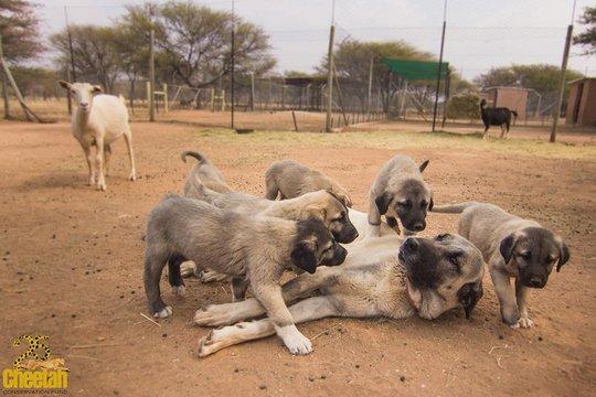 Kiri and Pups