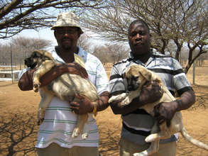 Communal farmers in Namibia receive puppies