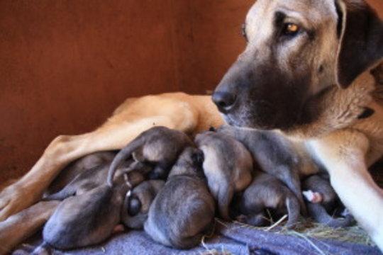 Kiri and puppies