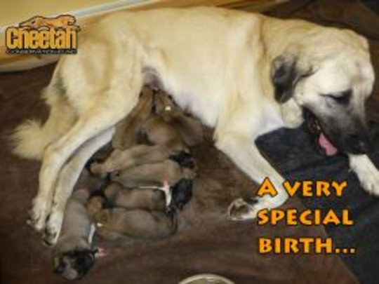 A Very Special Birth