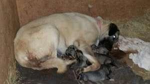 Kiri and her Puppies