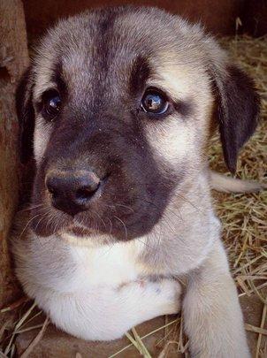One of our Karabibs' beautiful pups!