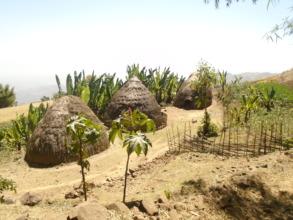 Homes in Mela Gagula