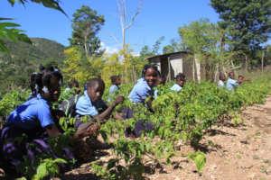 The school garden at Wesleyan School in Nan Mango