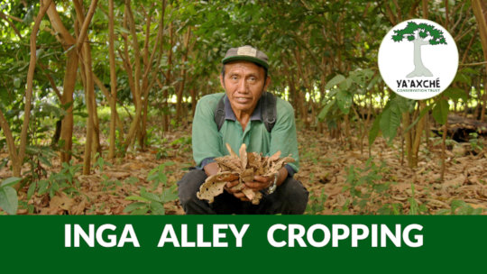 Inga Alley Cropping - Climate Smart Farming video
