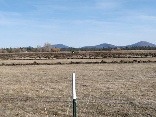 Field work at RTF's northern CA satellite ranch