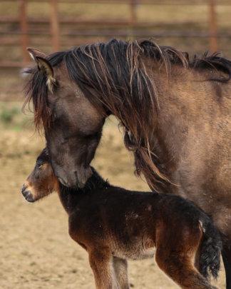 Eros, RTF Lompoc's new resident with Mom