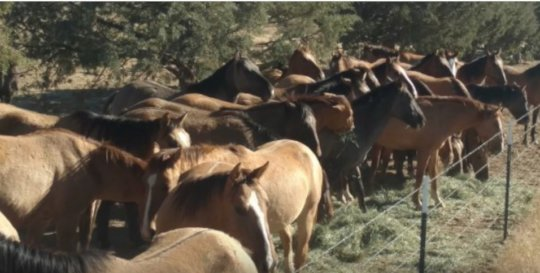 Gila Herd Members