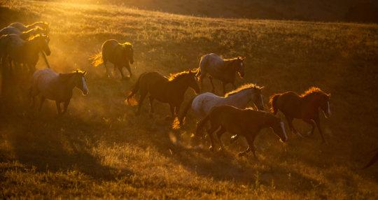 Herd in San Luis Obispo-Photo credit: Rich Sladick