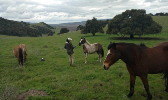 Some of our horse friends