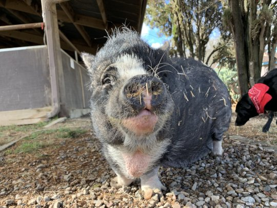 Minnuette smiling after her morning breakfast!