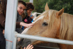 Education, outreach key to saving wild horses