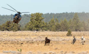 Fighting for wild horses, burros