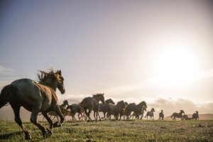 Run RTF's American Wild Horse Sanctuary for a Year