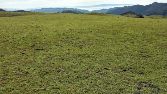 Grass popping up at our San Luis Obispo satellite