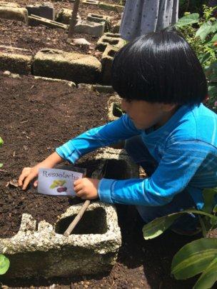 Mardoqueo planting beet root seeds