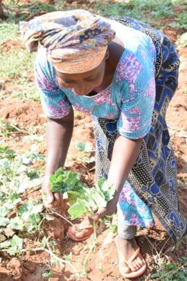 Jessica picks fresh leaves from her Forest Garden