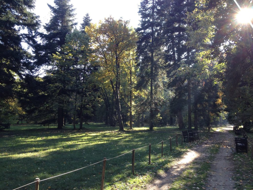 Planting a Forest to fight pollution in Sofia